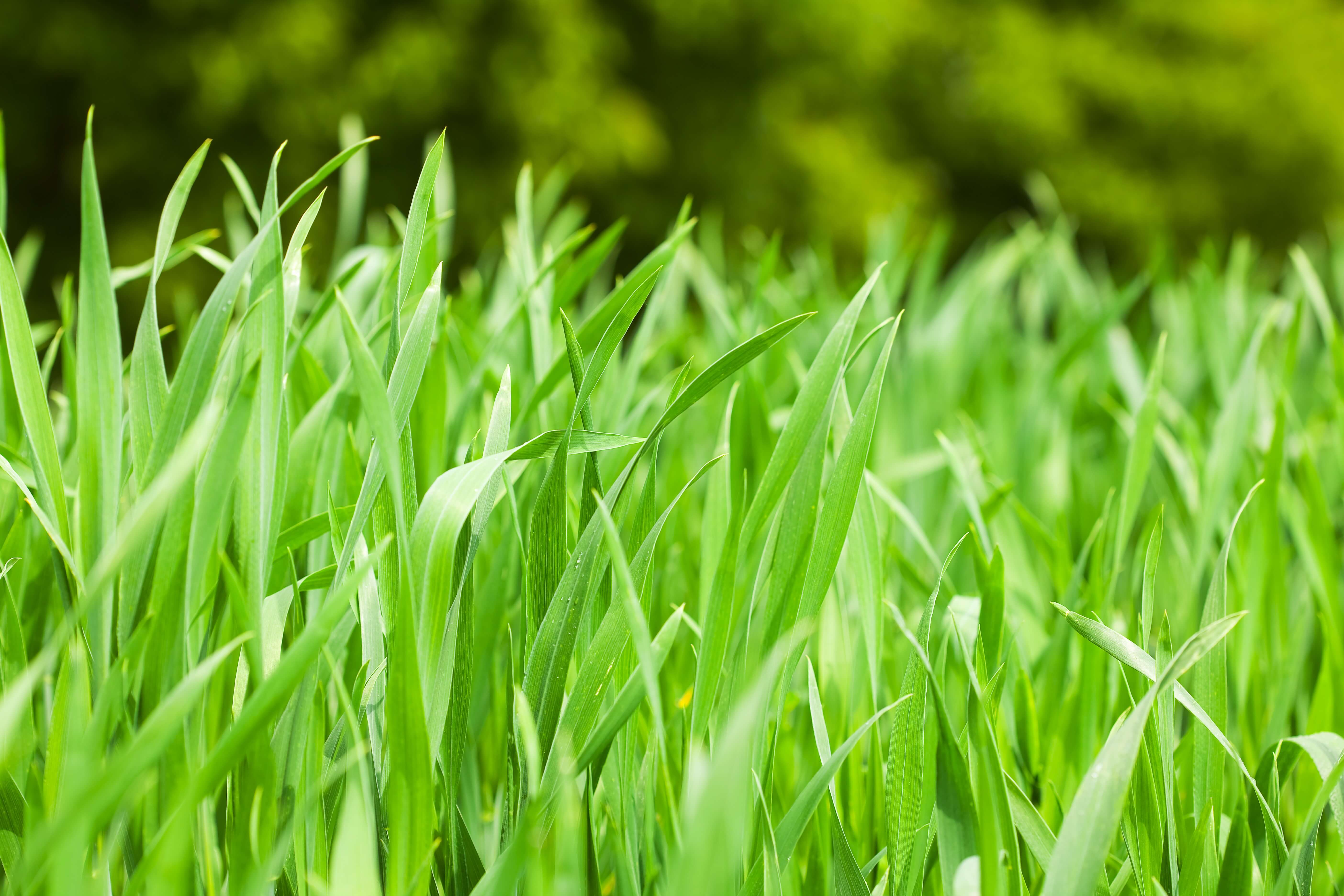How to Keep Your Grass Green in the Winter