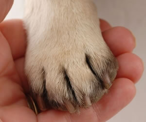 Trimming your dog\'s nails - Country Store - Farm - Pet - Home
